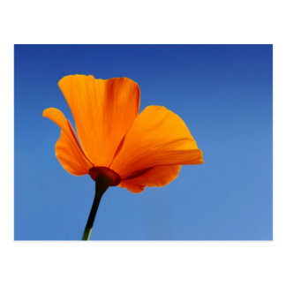 California Poppy Against Blue Sky Postcard