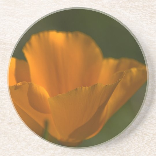 California Poppy Coaster