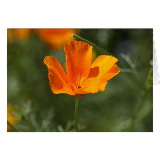California Poppy (Eschscholzia californica) Card