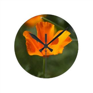 California Poppy (Eschscholzia californica) Clock
