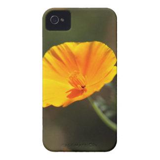 California Poppy (Eschscholzia californica) iPhone 4 Case
