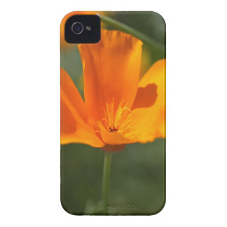 California Poppy (Eschscholzia californica) iPhone 4 Covers