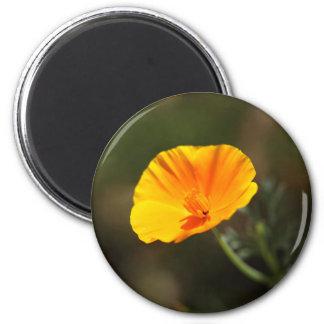 California Poppy (Eschscholzia californica) Magnet