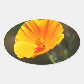 California Poppy (Eschscholzia californica) Oval Sticker