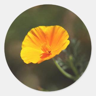 California Poppy (Eschscholzia californica) Round Sticker