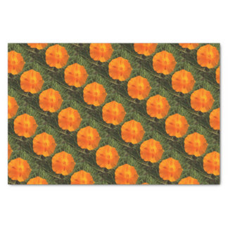 California Poppy Flower Tissue Paper