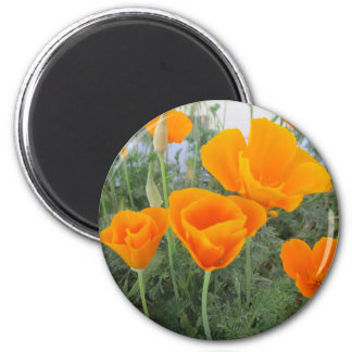 California Poppy Magnet