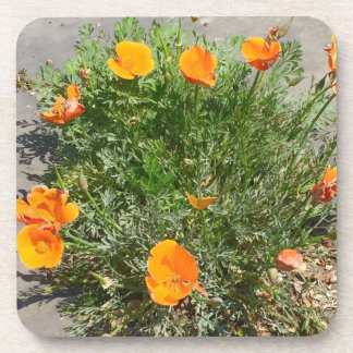 California Poppy Orange Flowery Coasters