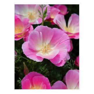 California Poppy Postcard