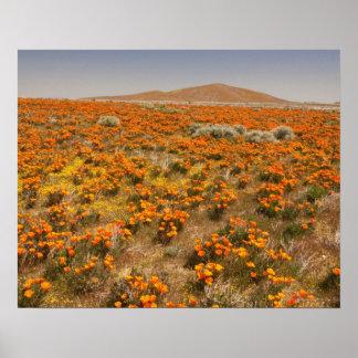 California poppy wildflower poster