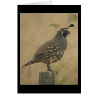 California Quail Card