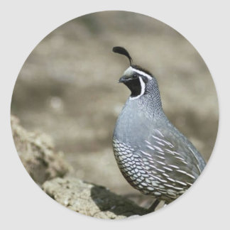 California quail classic round sticker