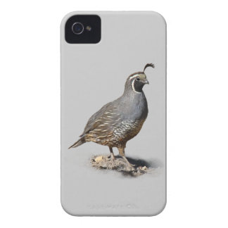 CALIFORNIA QUAIL iPhone 4 CASE