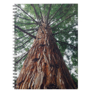 California Redwood notebook
