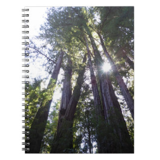 California Redwood Trees by RedwoodLove Notebooks