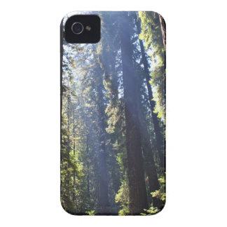 California Redwoods iPhone 4 Case