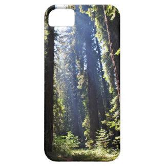 California Redwoods iPhone 5 Cases