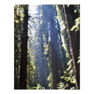 California Redwoods Personalized Letterhead