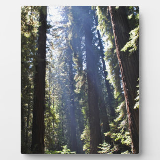 California Redwoods Plaque