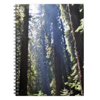 California Redwoods Spiral Note Books