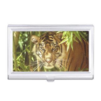California, San Francisco Zoo, Sumatran Tiger Business Card Case