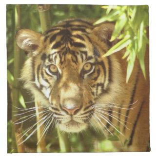California, San Francisco Zoo, Sumatran Tiger Cloth Napkins