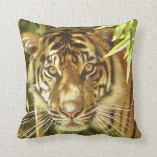 California, San Francisco Zoo, Sumatran Tiger Throw Pillow