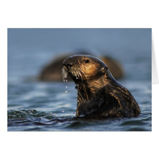 California Sea Otter Card