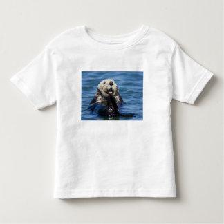 California Sea Otter Enhydra lutris) grooms Tees