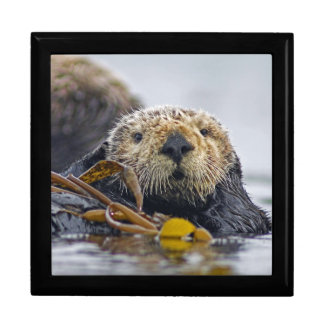 "California Sea Otter ""Enhydra lutris""  Wildlife Trinket Box"