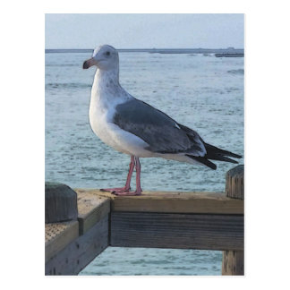 California Seagull Postcard
