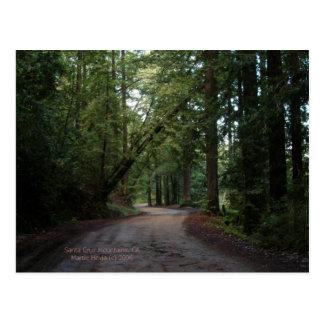 California Seasons - Redwoods Road - Postcard