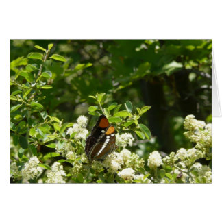 California Sister Butterfly in Yosemite Card