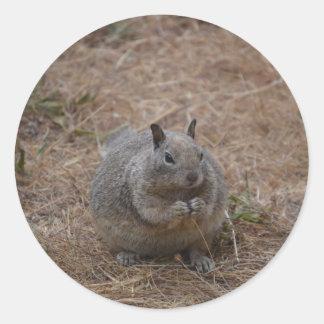 California Spotted Ground Squirrel Round Sticker