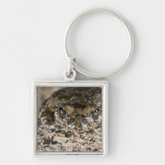 California tree frog,(Pseudacris cadaverina), Silver-Colored Square Keychain