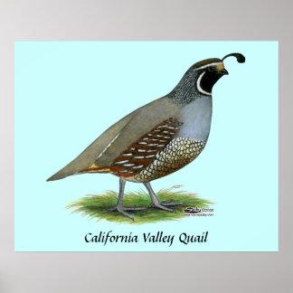 California Valley Quail Poster