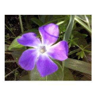 California Wildflower Postcard