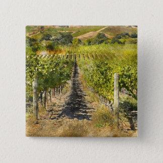 California Wine Vineyard 2 Inch Square Button