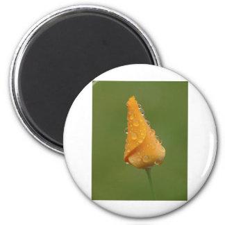 Californian Poppy 2 Inch Round Magnet