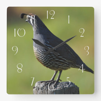 Californian quail square wall clock