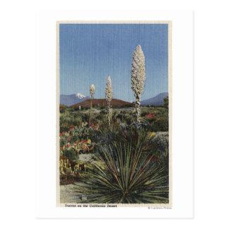 CaliforniaYucca Cacti in Bloom in Desert Postcard