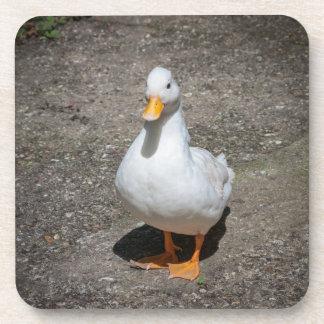 Call duck coaster