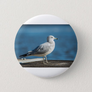 Call me M.Seagull 2 Inch Round Button
