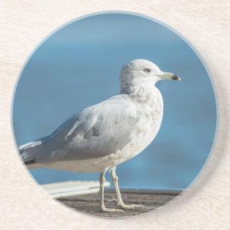 Call me M.Seagull Coaster