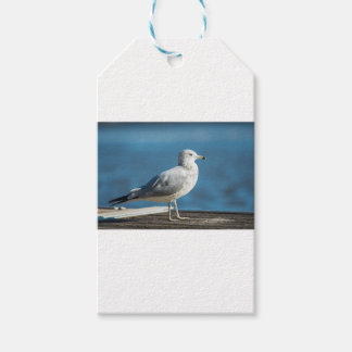 Call me M.Seagull Gift Tags