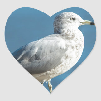 Call me M.Seagull Heart Sticker