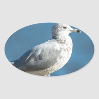 Call me M.Seagull Oval Sticker