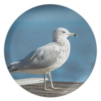 Call me M.Seagull Plate