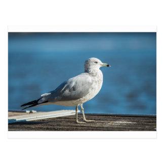 Call me M.Seagull Postcard