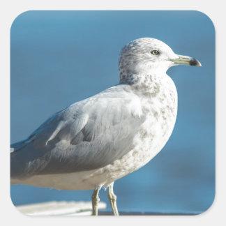 Call me M.Seagull Square Sticker